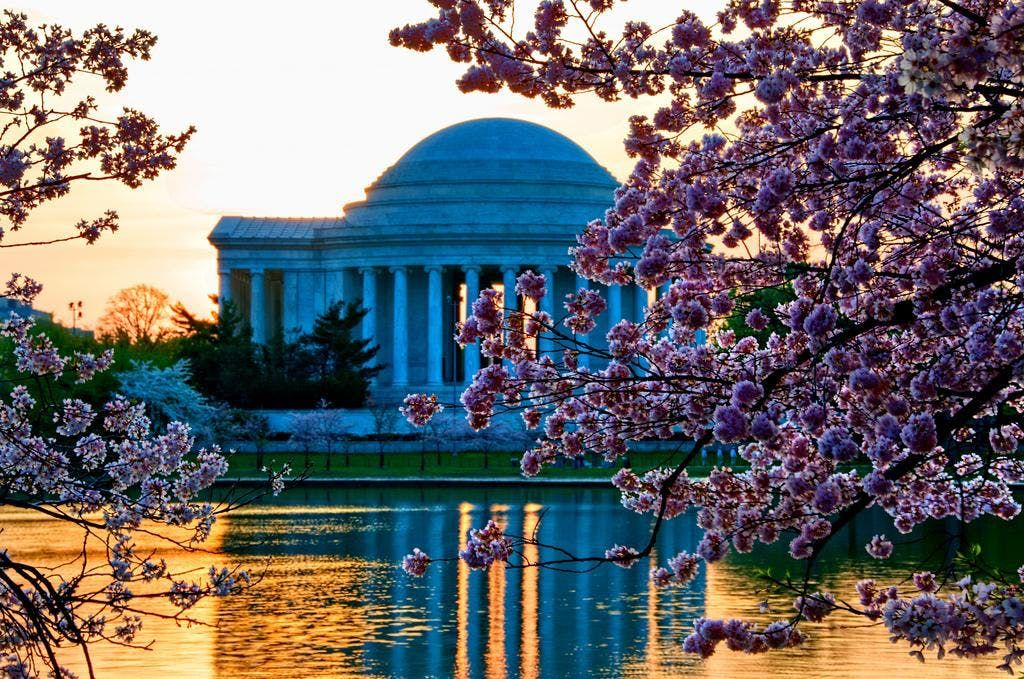 Cherry Blossom Bloom -  A Weekend in Washington D.C.