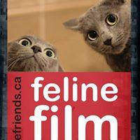 Feline Film Festival  2017