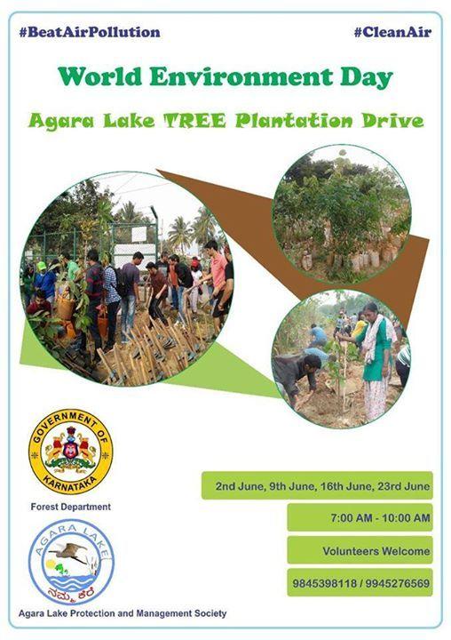 Agara Lake Tree Plantation Drive