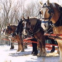 Family Day Sleigh Rides &amp More
