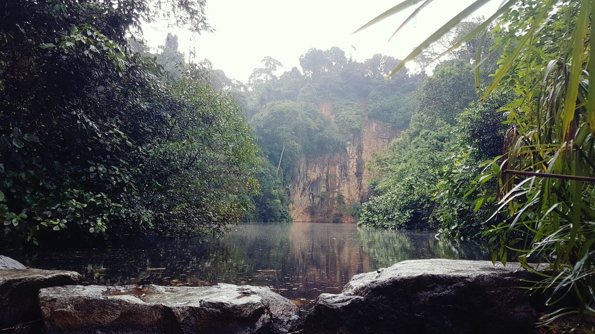 Forest Bathing & Wellness foREST  Bukit Batok Nature Park