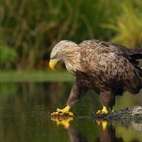 ywy album przyrody - wystawa fotografii przyrodniczej