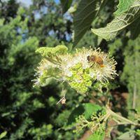 Basics in Bee Keeping