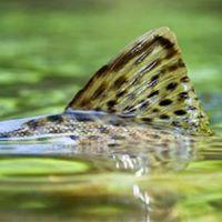 Cabelas Conservation Partner Meet &amp Greet
