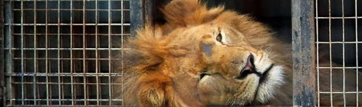 Join us to Protest Ringling Bros Animal Cruelty 1