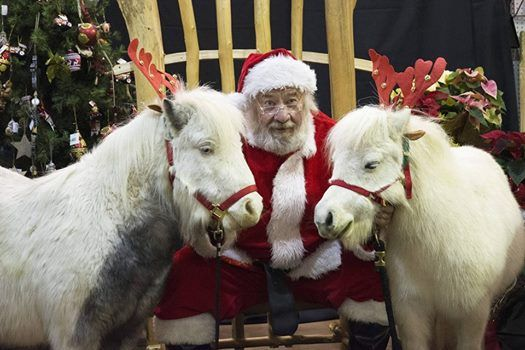 Endless Trails Holiday Mini Horses At Miromar Outlets