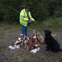 Dog Training Kilkenny with Profound hound