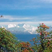 The Barsey Rhodendron Trek Experience