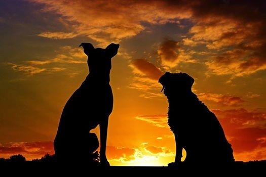 Applied Zoopharmacognosy Canine Gateway Workshop