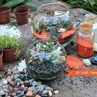 DIY Terrarium Workshop at Lodi