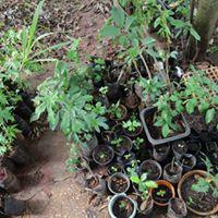 Mutiro de plantio em Uberlandia