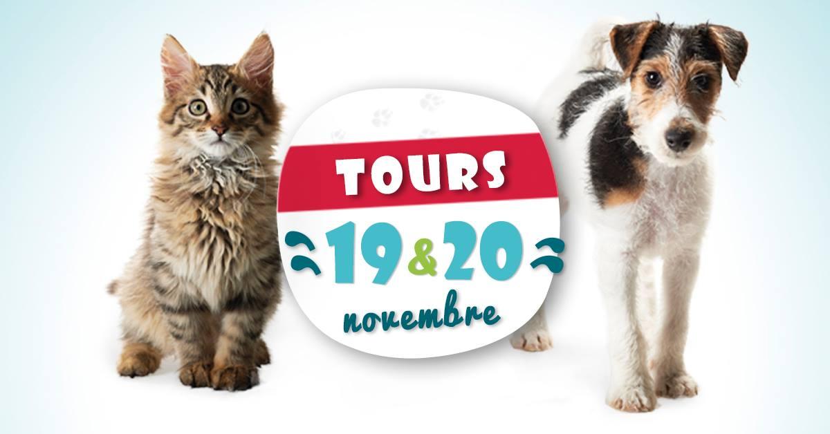 Tours salon du chiot et de quelques chatons at parc - Salon du chiot et du chaton ...