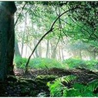 Psychic &amp Spiritual Retreat  NEW FOREST