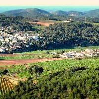 Cata de vinos Celler Foresta