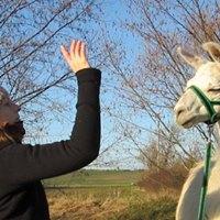 Lamas und Alpakas verstehen lernen Seminar Krpersprache  Lamas