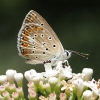 Torrente Rubino (Nebrodi-Caronia)