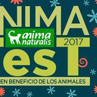 AnimaFest benfico 2017