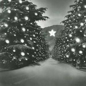 First Saturday Learn About Christmas Tree Lane More At Altadena
