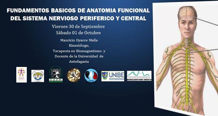 Fundamentos Básicos de Anatomía Funcional del Sistema Nervioso ...