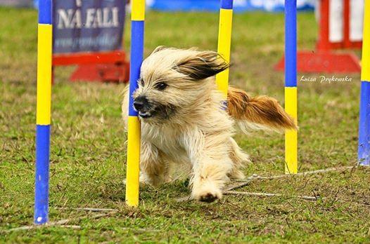 Elitarny Fina Lolo Pets Classic Cup