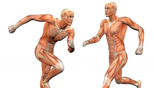 Curso Anatomía, Fisiología Y Fisiología Del Ejercicio – Curso On at ...