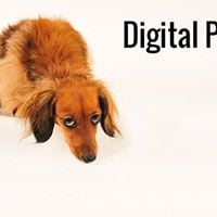 Digital Photography An Introduction - Module 3 - Andover