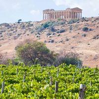 La Sicilia del vino a Torino