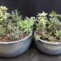 Make &amp Take Herb Planter Class at Sipkens Nurseries