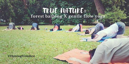True Nature Forest Bathing X Gentle Flow Yoga