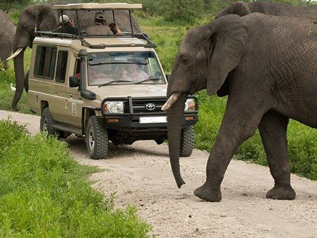 4.Days Tsavo EastWest & Amboseli on a private