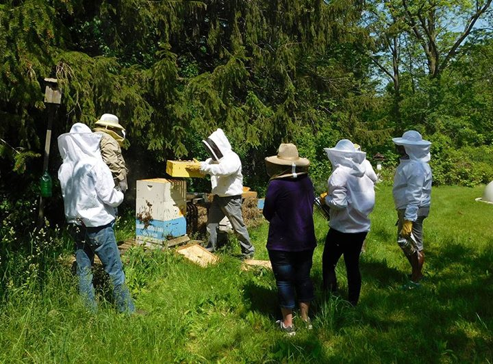 Beginners Backyard Beekeeping   Help Save The Bees!