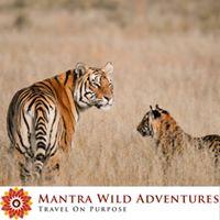 Wild Heart of India Photo Safari Tour