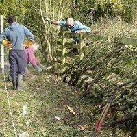 Hedge Laying Training Course