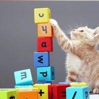 Kitten Kindergarten 2 classes included