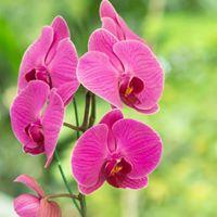 Orchid Weekend at Colasantis