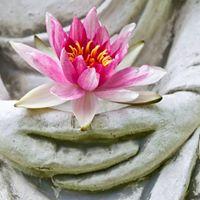 The Wisdom of Yoga Series
