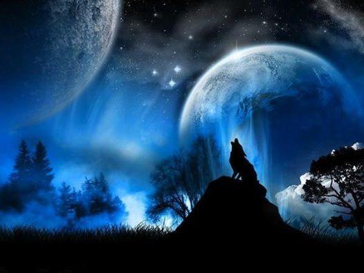 Wolf Super Full Moon BBQ Dinner Moonlit trekking and Bonfire