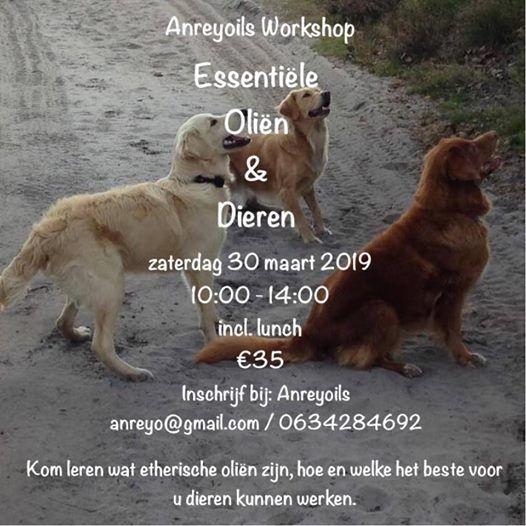 Olin & Dieren Grote Workshop