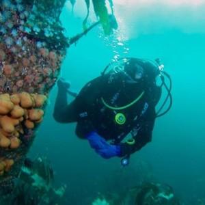 Island Dive Safari to Clare Island