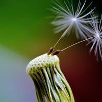 Start Mindfulness-training