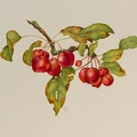 Botanical Art Exhibition