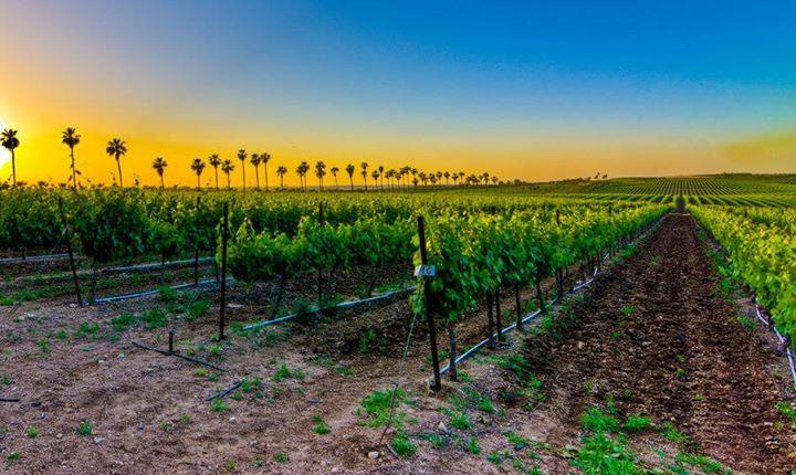 Wine Spirits and Environmental Law Panel