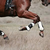 Fun In February Jumper Show at Oakdale Equestrian Center