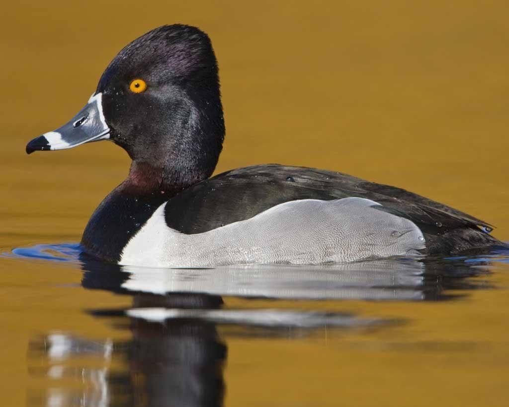 DC Audubon Society Bird Walk at Hains Point