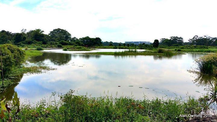 Registration Closed Walk Is Full-Birdwatching at Kranji Marshes