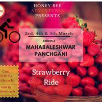 Strawberry Ride In Mahabaleshwar &amp panch gani