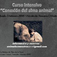 Curso intensivo &quotConexin del alma animal&quot