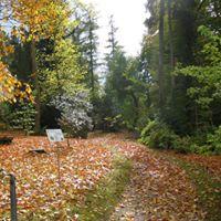 Les arbres en automne un festival de couleurs - Bume im Herbst