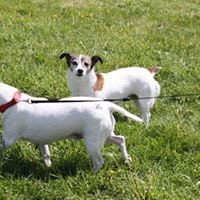FUN DOG SHOWSunday 5th March 10.00 start Sheffield