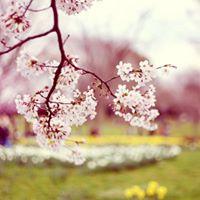 Pavasario mza